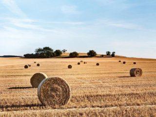 """""""سلاح القمح"""": الجزائر تستنجد بروسيا على حساب فرنسا"""